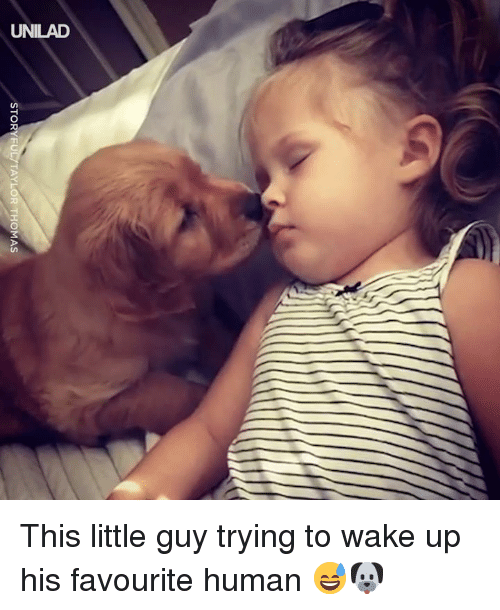 Dank, 🤖, and Thomas: STOR  YLOR THOMAS This little guy trying to wake up his favourite human 😅🐶