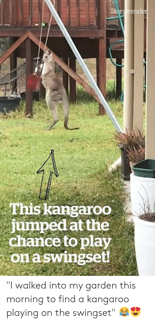 """kangaroo: Story trender  This kangaroo  jumped at the  chance to play  on aswingset! """"I walked into my garden this morning to find a kangaroo playing on the swingset"""" 😂😍"""