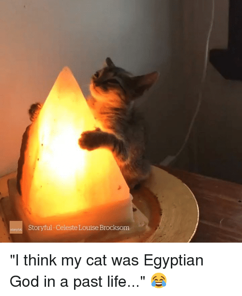 "egyptian god: Storyful-Celeste Louise Brocksom ""I think my cat was Egyptian God in a past life..."" 😂"