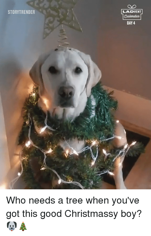 Youve Got This: STORYTRENDER  LADVENT  DAY 4 Who needs a tree when you've got this good Christmassy boy? 🐶🎄