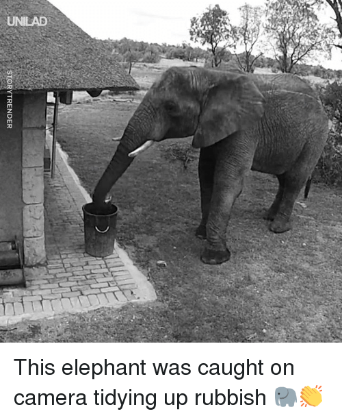 rubbish: STORYTRENDER This elephant was caught on camera tidying up rubbish 🐘👏