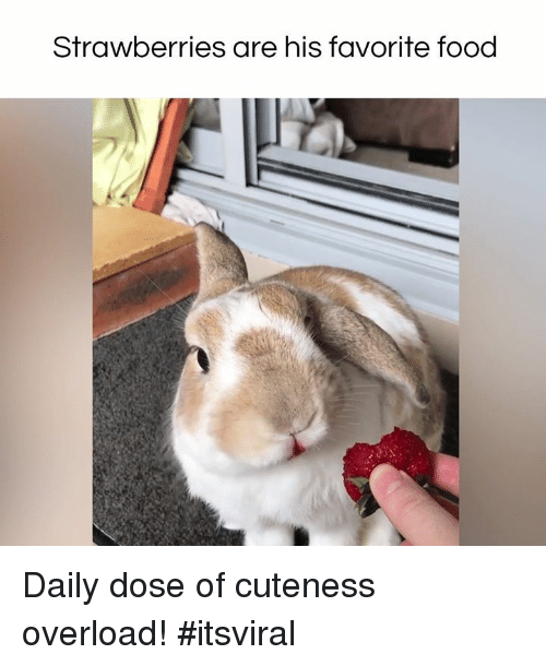 Memes, 🤖, and Overload: Strawberries are his favorite food Daily dose of cuteness overload! #itsviral