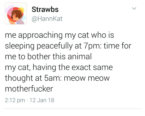 meow meow: Strawbs  @HannKat  me approaching my cat who is  sleeping peacefully at 7pm: time for  me to bother this animal  my cat, having the exact same  thought at 5am: meow meow  motherfucker  2:12 pm 12 Jan 18