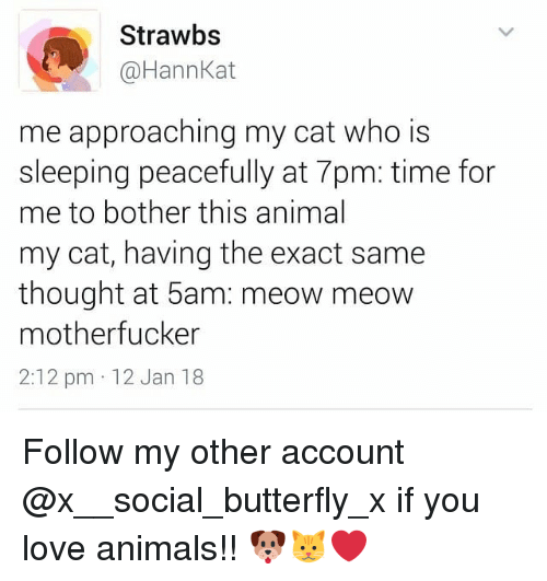 meow meow: Strawbs  @HannKat  me approaching my cat who is  sleeping peacefully at 7pm: time for  me to bother this animal  my cat, having the exact same  thought at 5am: meow meow  motherfucker  2:12 pm 12 Jan 18 Follow my other account @x__social_butterfly_x if you love animals!! 🐶🐱❤