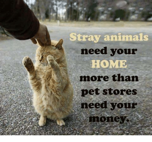 Animals, Memes, and Home: Stray animals  need your  HOME  more than  pet stores  need your  mone