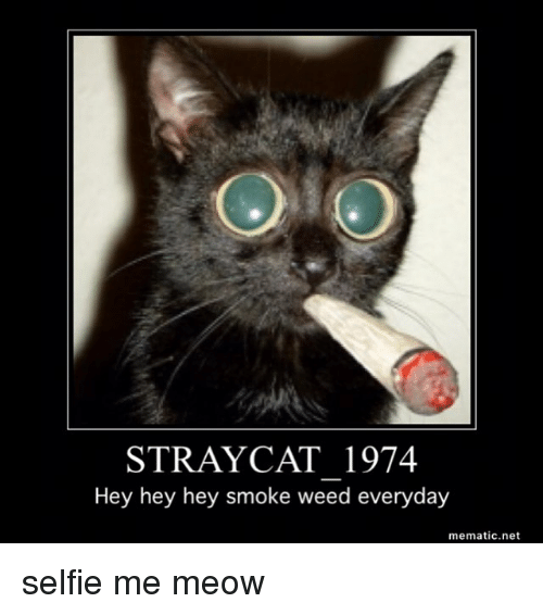 Memes, Smoke Weed Everyday, and 🤖: STRAY CAT 1974  Hey hey hey smoke weed everyday  mematic.net selfie me meow