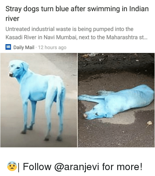 maharashtra: Stray dogs turn blue after swimming in Indian  river  Untreated industrial waste is being pumped into the  Kasadi River in Navi Mumbai, next to the Maharashtra st..  lm  Daily Mail 12 hours ago 😨| Follow @aranjevi for more!