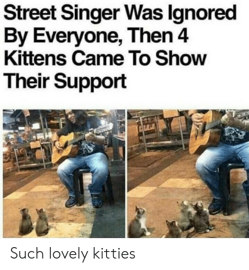 Kitties: Street Singer Was lgnored  By Everyone, Then4  Kittens Came To Show  Their Support Such lovely kitties