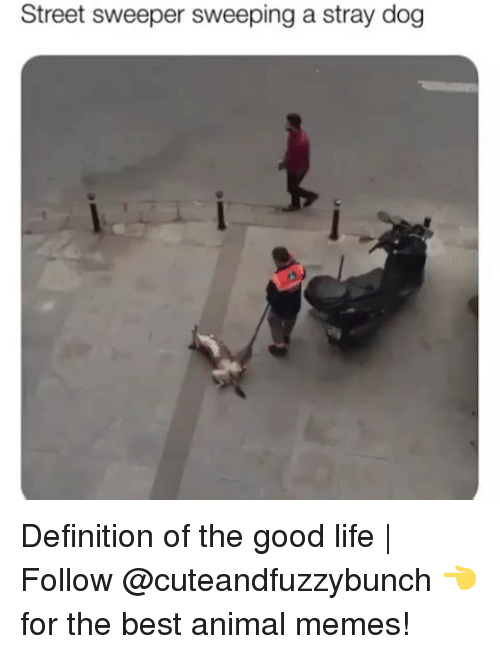 Life, Memes, and Animal: Street sweeper sweeping a stray dog Definition of the good life | Follow @cuteandfuzzybunch 👈 for the best animal memes!