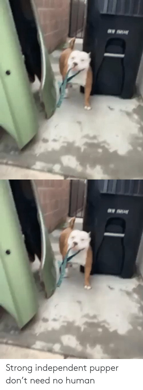 Strong: Strong independent pupper don't need no human