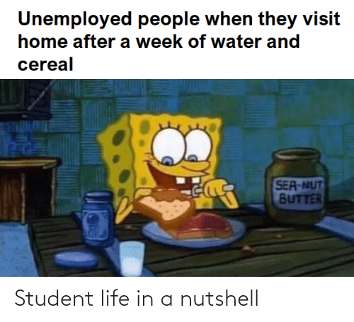 in a nutshell: Student life in a nutshell