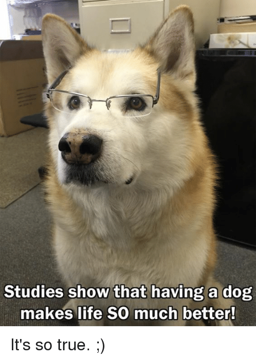 Memes, 🤖, and So True: Studies show that having a dog  makes life so much better! It's so true. ;)