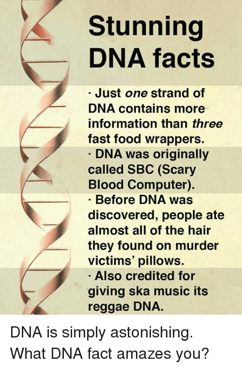 ska: Stunning  DNA facts  Just one strand of  DNA contains more  information than three  fast food wrappers.  DNA was originally  called SBC (Scary  Blood Computer).  Before DNA was  discovered, people ate  almost all of the hair  they found on murder  victims' pillows.  Also credited for  giving ska music its  reggae DNA. DNA is simply astonishing.  What DNA fact amazes you?