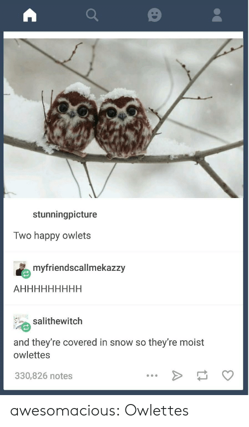 Moist: stunningpicture  Two happy owlets  myfriendscallmekazzy  salithewitch  and they're covered in snow so they're moist  owlettes  330,826 notes awesomacious:  Owlettes