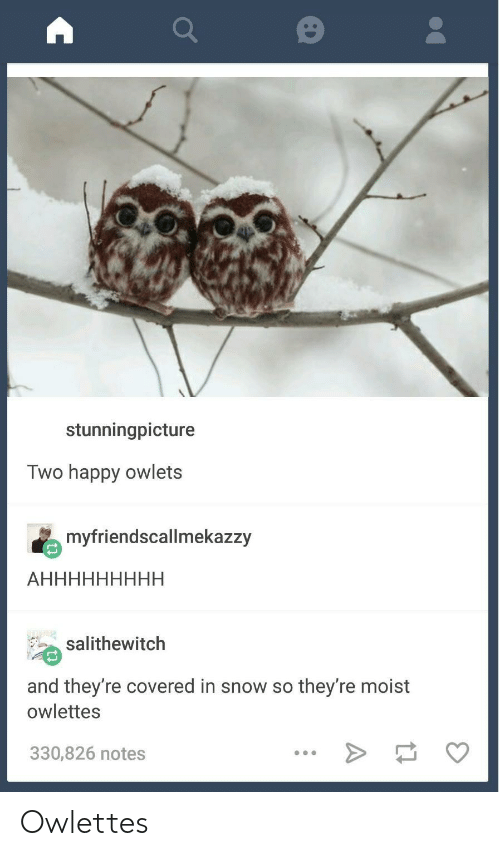 Moist: stunningpicture  Two happy owlets  myfriendscallmekazzy  salithewitch  and they're covered in snow so they're moist  owlettes  330,826 notes Owlettes
