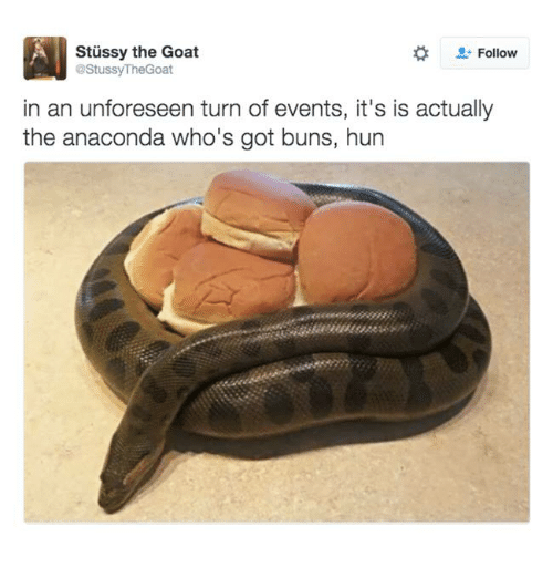 Anaconda, Memes, and Goat: Stussy the Goat  Follow  @Stussy TheGoat  in an unforeseen turn of events, it's is actually  the anaconda who's got buns, hun