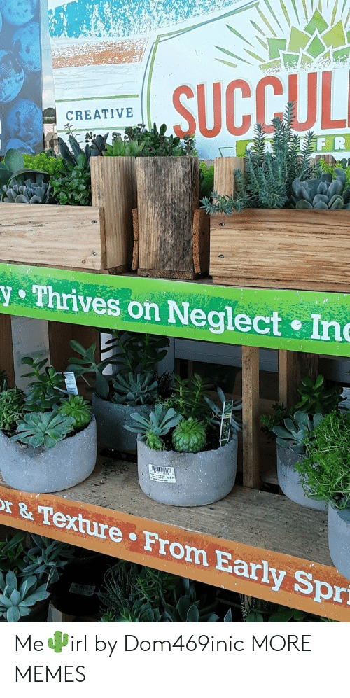 Dank, Memes, and Target: SUCCULI  CREATIVE  A FR  Thrives on Neglect Inc  r& Texture From Early Sprí Me🌵irl by Dom469inic MORE MEMES