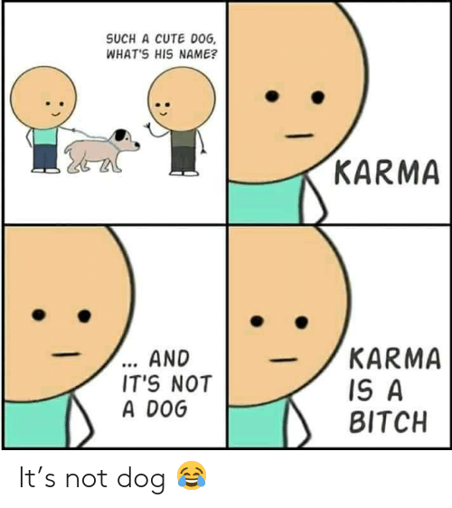 Karma: SUCH A CUTE DOG  WHAT'S HIS NAME?  KARMA  ... AND  IT'S NOT  A DOG  KARMA  IS A  BITCH It's not dog 😂
