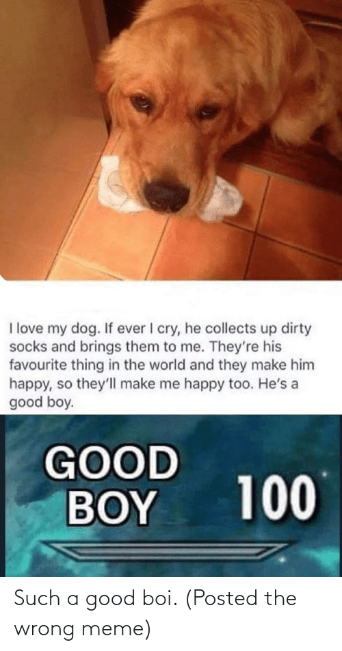 Wrong Meme: Such a good boi. (Posted the wrong meme)