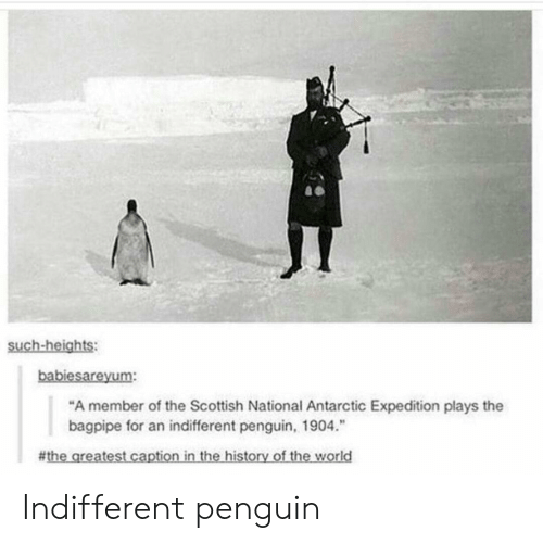 """antarctic: such-heights:  babiesareyum:  """"A member of the Scottish National Antarctic Expedition plays the  bagpipe for an indifferent penguin, 1904.""""  # thegreatest captioninthe-historyoftheworld Indifferent penguin"""