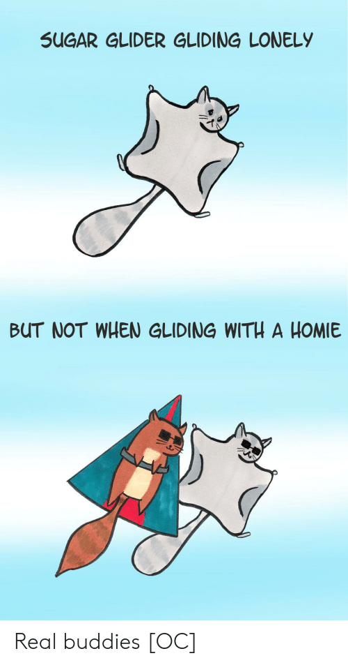 glider: SUGAR GLIDER GLIDING LONELY  BUT NOT WHEN GLIDING WITH A HOMIE Real buddies [OC]
