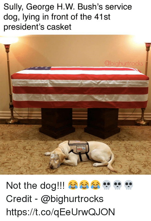 Presidents: Sully, George H.W. Bush's service  dog, lying in front of the 41st  president's casket  hurtrocks Not the dog!!! 😂😂😂💀💀💀  Credit - @bighurtrocks https://t.co/qEeUrwQJON