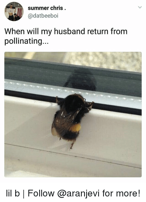 Lil B, Memes, and Summer: summer chris  @datbeeboi  When will my husband return from  pollinating.. lil b | Follow @aranjevi for more!