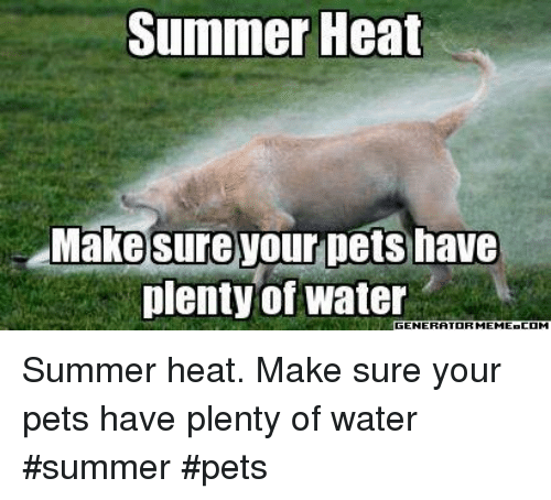 Memes, Summer, and Pets: Summer Heat  Make sure your pets have  plenty of water Summer heat. Make sure your pets have plenty of water   #summer #pets