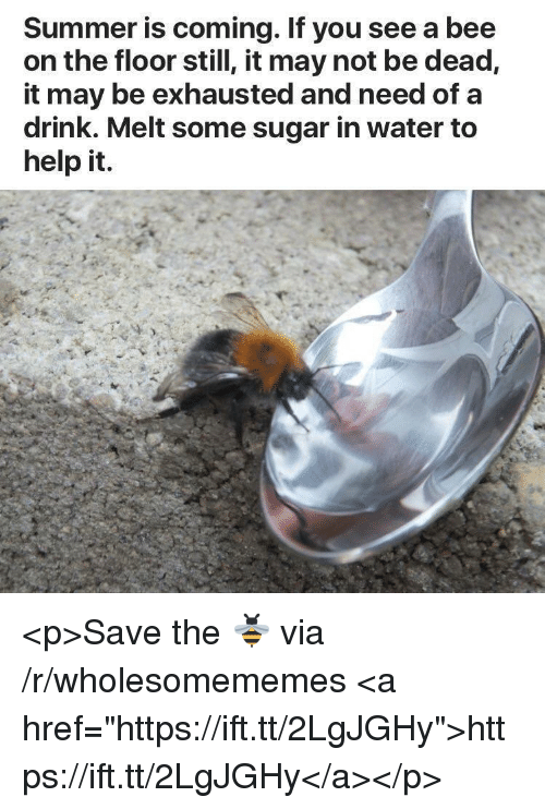 """Summer, Help, and Sugar: Summer is coming. If you see a bee  on the floor still, it may not be dead,  it may be exhausted and need of a  drink. Melt some sugar in water to  help it. <p>Save the 🐝 via /r/wholesomememes <a href=""""https://ift.tt/2LgJGHy"""">https://ift.tt/2LgJGHy</a></p>"""