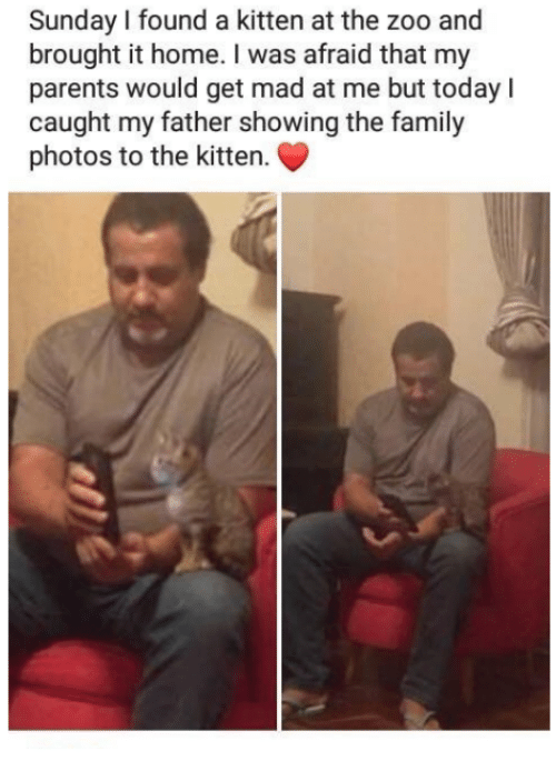 Family Photos: Sunday I found a kitten at the zoo and  brought it home. I was afraid that my  parents would get mad at me but todayl  caught my father showing the family  photos to the kitten.