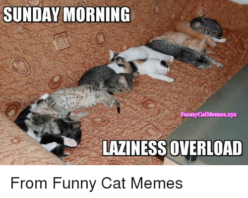 Funny Cat Memes Of 2017 On SIZZLE