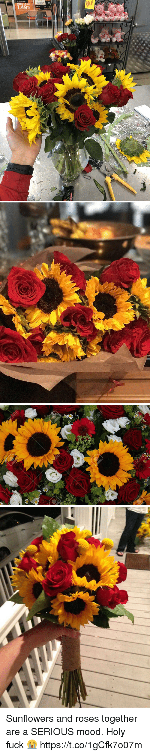 Mood, Fuck, and Relatable: Sunflowers and roses together are a SERIOUS mood. Holy fuck 😭 https://t.co/1gCfk7o07m