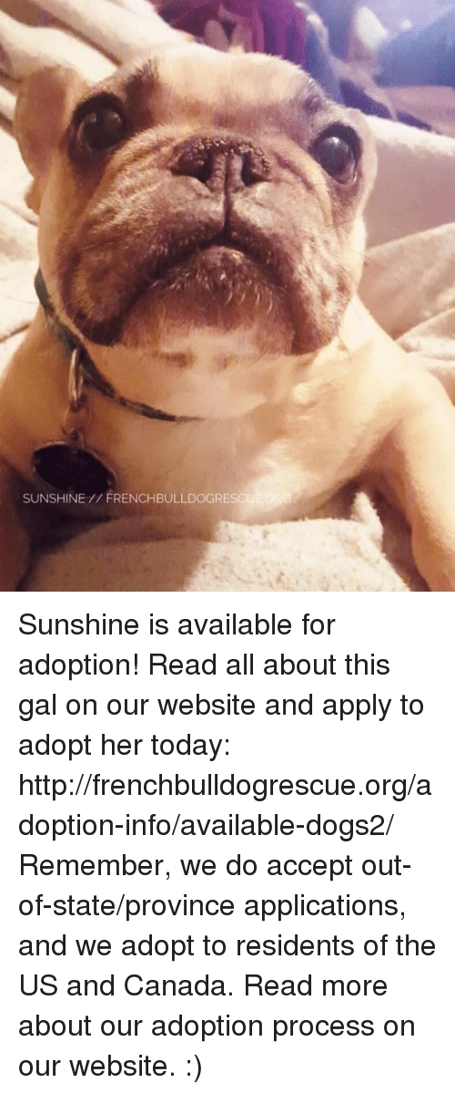 us-and-canada: SUNSHINE FRENCHBULLDOGRE Sunshine is available for adoption! Read all about this gal on our website <location, likes, dislikes> and apply to adopt her today: http://frenchbulldogrescue.org/adoption-info/available-dogs2/  Remember, we do accept out-of-state/province applications, and we adopt to residents of the US and Canada. Read more about our adoption process on our website. :)