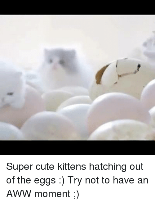 cute kittens: Super cute kittens hatching out of the eggs :)  Try not to have an AWW moment ;)