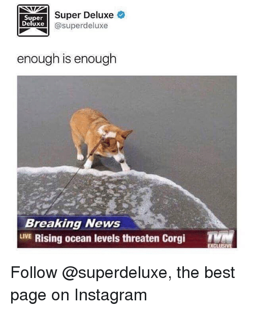 Corgi, Funny, and Instagram: Super  Deluxe  Super Deluxe  @superdeluxe  enough is enough  Breaking News  LVE Rising ocean levels threaten Corgi  EXCLUS Follow @superdeluxe, the best page on Instagram