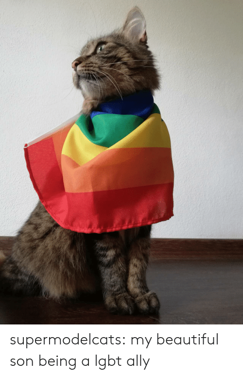 Ally: supermodelcats:  my beautiful son being a lgbt ally