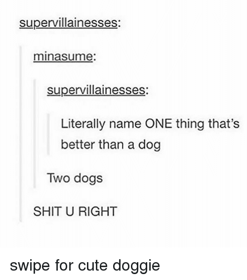 Cute, Dogs, and Shit: supervillainesses:  minasume  supervillainesses  Literally name ONE thing that's  better than a dog  Two dogs  SHIT U RIGHT swipe for cute doggie