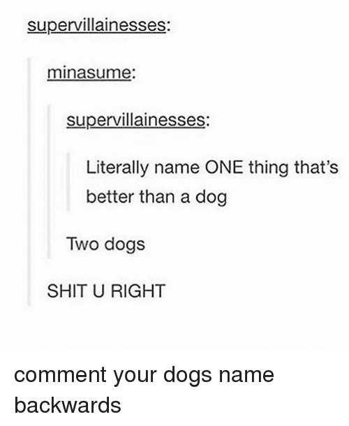 Dogs, Memes, and Shit: supervillainesses  minasume:  supervillainesses:  Literally name ONE thing that's  better than a dog  Two dogs  SHIT U RIGHT comment your dogs name backwards