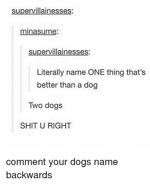 Dogs, Memes, and Shit: supervillainesses:  minasume  supervillainesses  Literally name ONE thing that's  better than a dog  Two dogs  SHIT U RIGHT comment your dogs name backwards