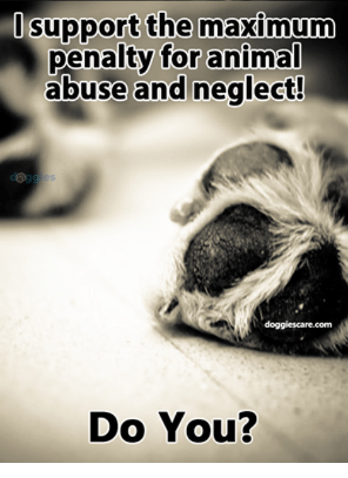 Memes, Animal Abuse, and 🤖: support the maximum  penalty for animal  abuse and neglect!  doggies care.com  Do You?