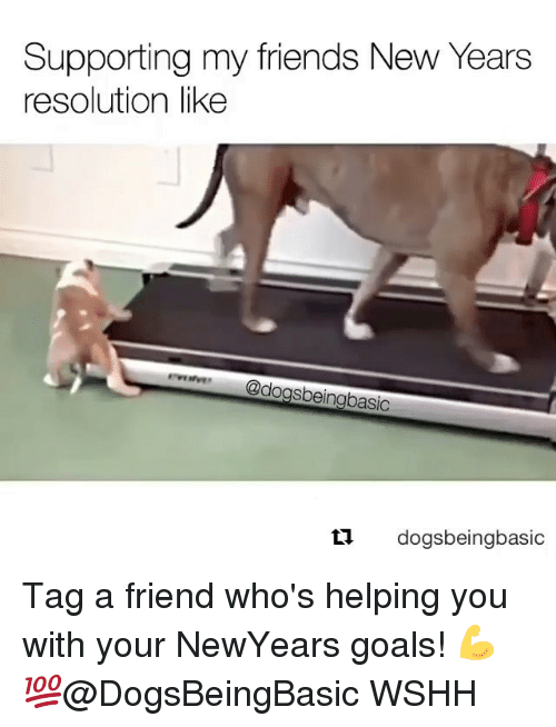 Memes, New Year's Resolutions, and Wshh: Supporting my friends New Years  resolution like  dogsbeingbasic  ti.  dogsbeingbasic Tag a friend who's helping you with your NewYears goals! 💪💯@DogsBeingBasic WSHH