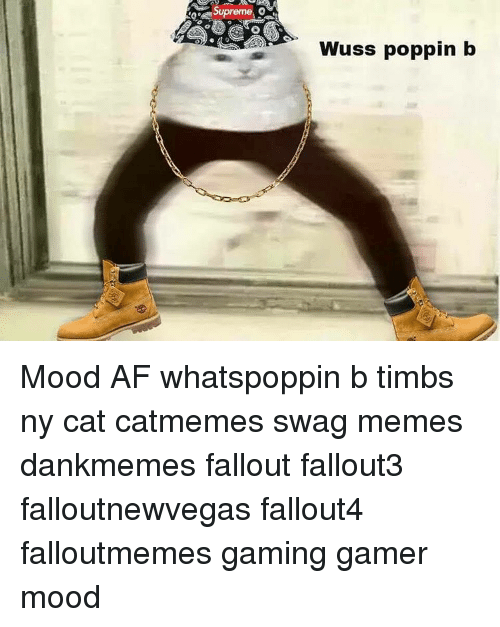 Wuss Poppin B: Supreme  Wuss poppin b Mood AF whatspoppin b timbs ny cat catmemes swag memes dankmemes fallout fallout3 falloutnewvegas fallout4 falloutmemes gaming gamer mood