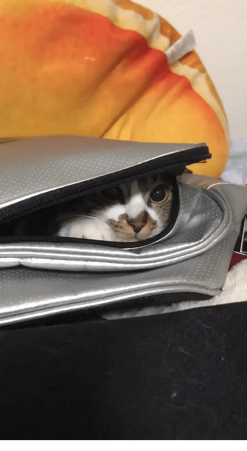 "Cats, Rest, and Surprise: ""Surprise!"" The Cat's rest bag"