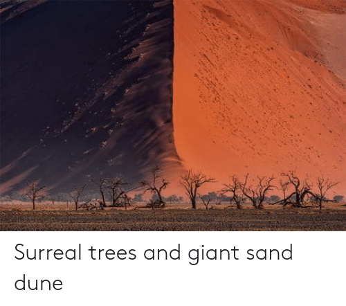 Dune: Surreal trees and giant sand dune
