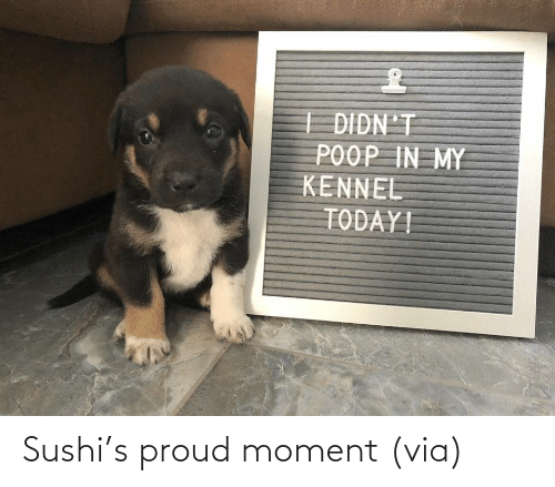 via: Sushi's proud moment (via)