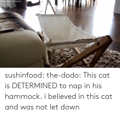 Hammock: sushinfood: the-dodo:  This cat is DETERMINED to nap in his hammock.  i believed in this cat and was not let down