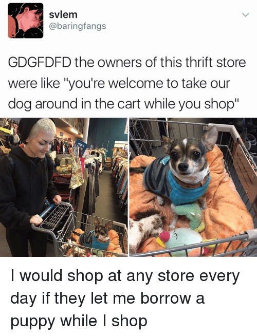 "Youre Welcom: svlem  @baring fangs  GDGFDFD the owners of this thrift store  were like ""you're welcome to take our  dog around in the cart while you shop""  MEN's I would shop at any store every day if they let me borrow a puppy while I shop"
