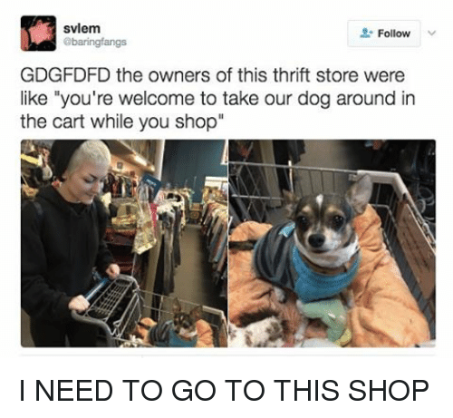 "Youre Welcom: svlem  Follow  abaringfangs  GDGFDFD the owners of this thrift store were  like ""you're welcome to take our dog around in  the cart while you shop I NEED TO GO TO THIS SHOP"