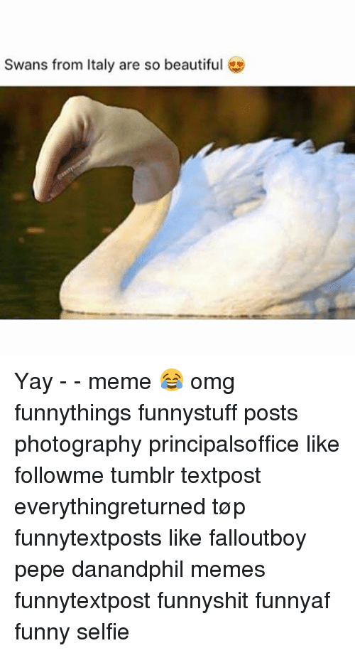 Swans From Italy Are So Beautiful Yay Meme Omg Funnythings Funnystuff Posts Photography Principalsoffice Like Followme Tumblr Textpost Everythingreturned Top Funnytextposts Like Falloutboy Pepe Danandphil Memes Funnytextpost Funnyshit Funnyaf 30 funny omg pictures and images. sizzle