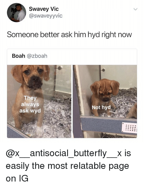 Wyd, Butterfly, and Relatable: Swavey Vic  @swaveyyvic  Someone better ask him hyd right now  Boah @zboah  They  always  ask wyd  Not hyd @x__antisocial_butterfly__x is easily the most relatable page on IG